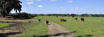 farm-conversions